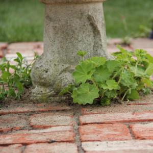 Minimalistisk trädgård