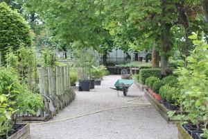 Planera trädgården