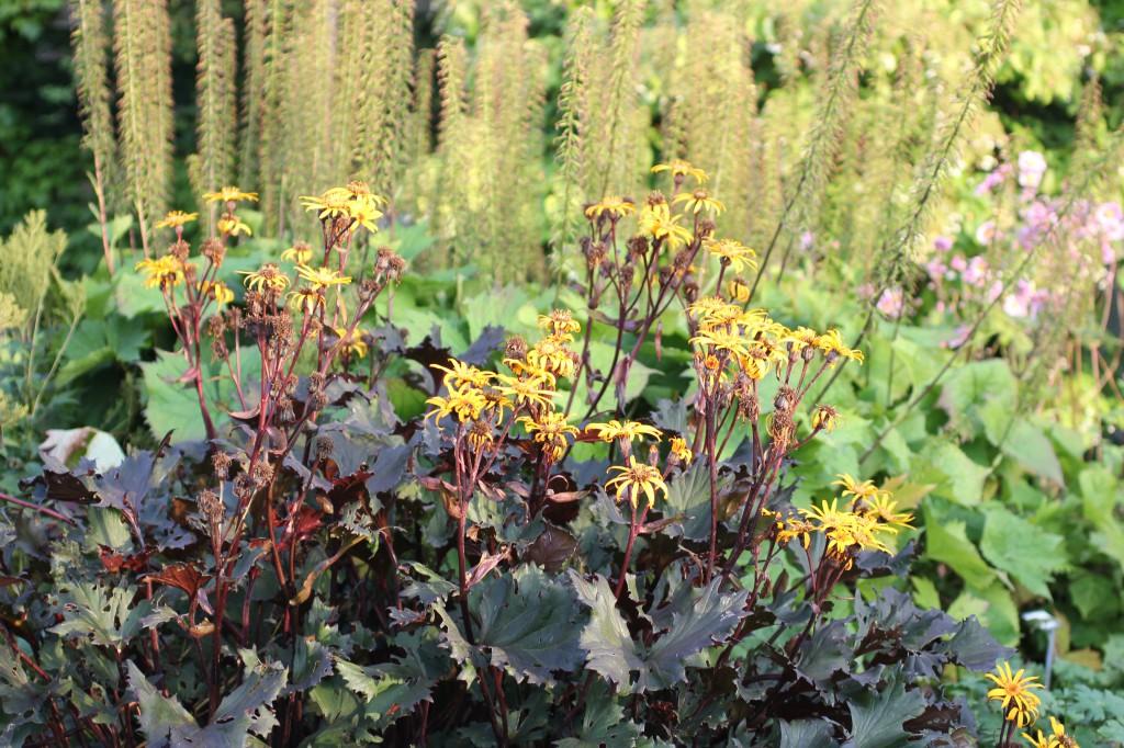 I perennsortimentet finns många olika sorter och alla med växtskyltar så man kan ta med sig namnet på de favoriter man hittar.