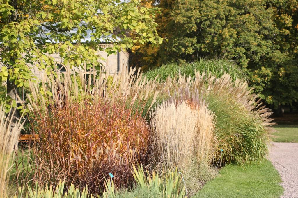 Startsida Höst Gräs