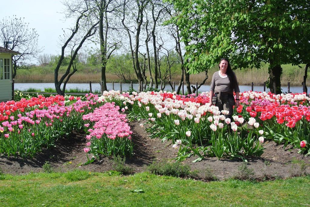 Hälsoträdgården är en arbetsplats och där ska finnas utrymme för aktivitet och upplevelser i en läkande miljö. Ett hav av tulpaner i glada färger på våren är minst sagt positivt för välbefinnandet!