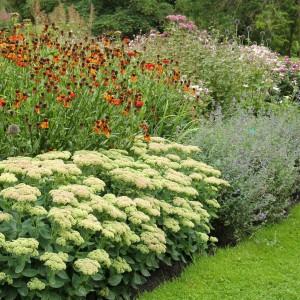planteringsformer - strikt
