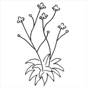 växtsätt - transparent