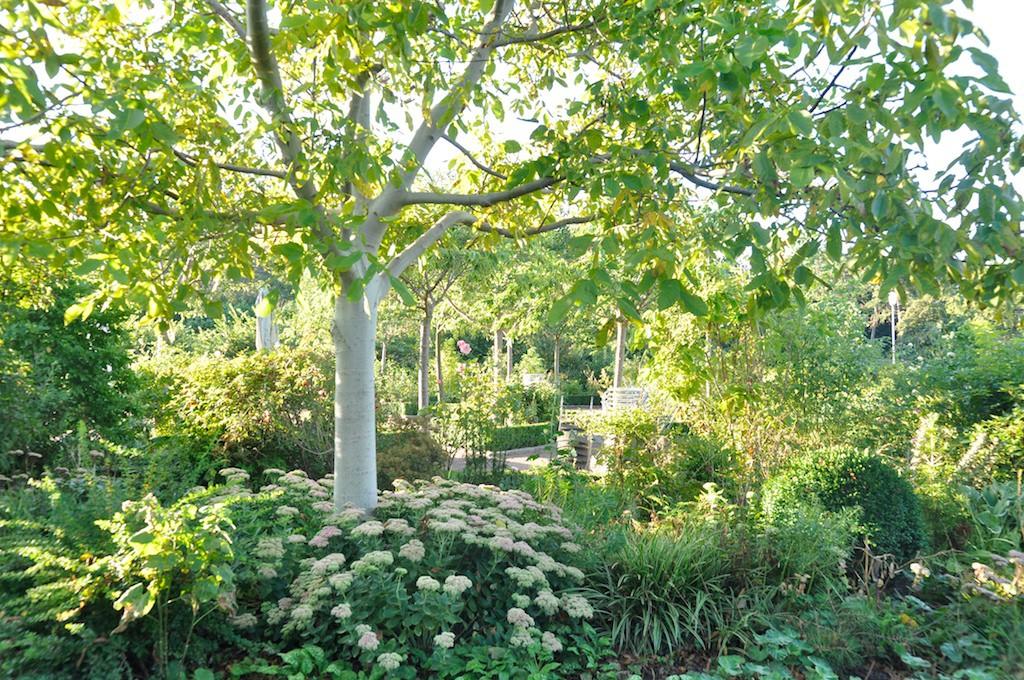 Bakom denna lummiga grönska ligger trädgårdscaféets uteservering.