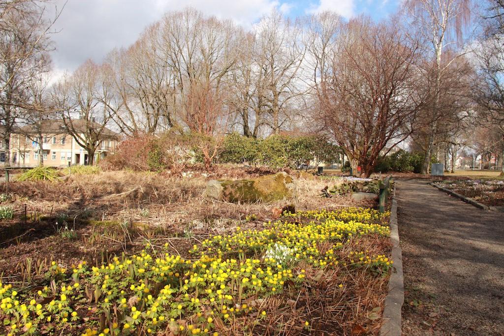 Perennerna är nerklippta på vårkanten och lökväxter ger färg åt rabatten. Vatten och gräs tillsammans med perenner ger en naturlik plantering.
