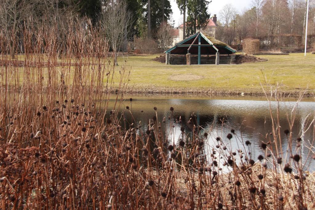 Tidig vår är övervintrade rudbeckior en bra inramning i perennaparken