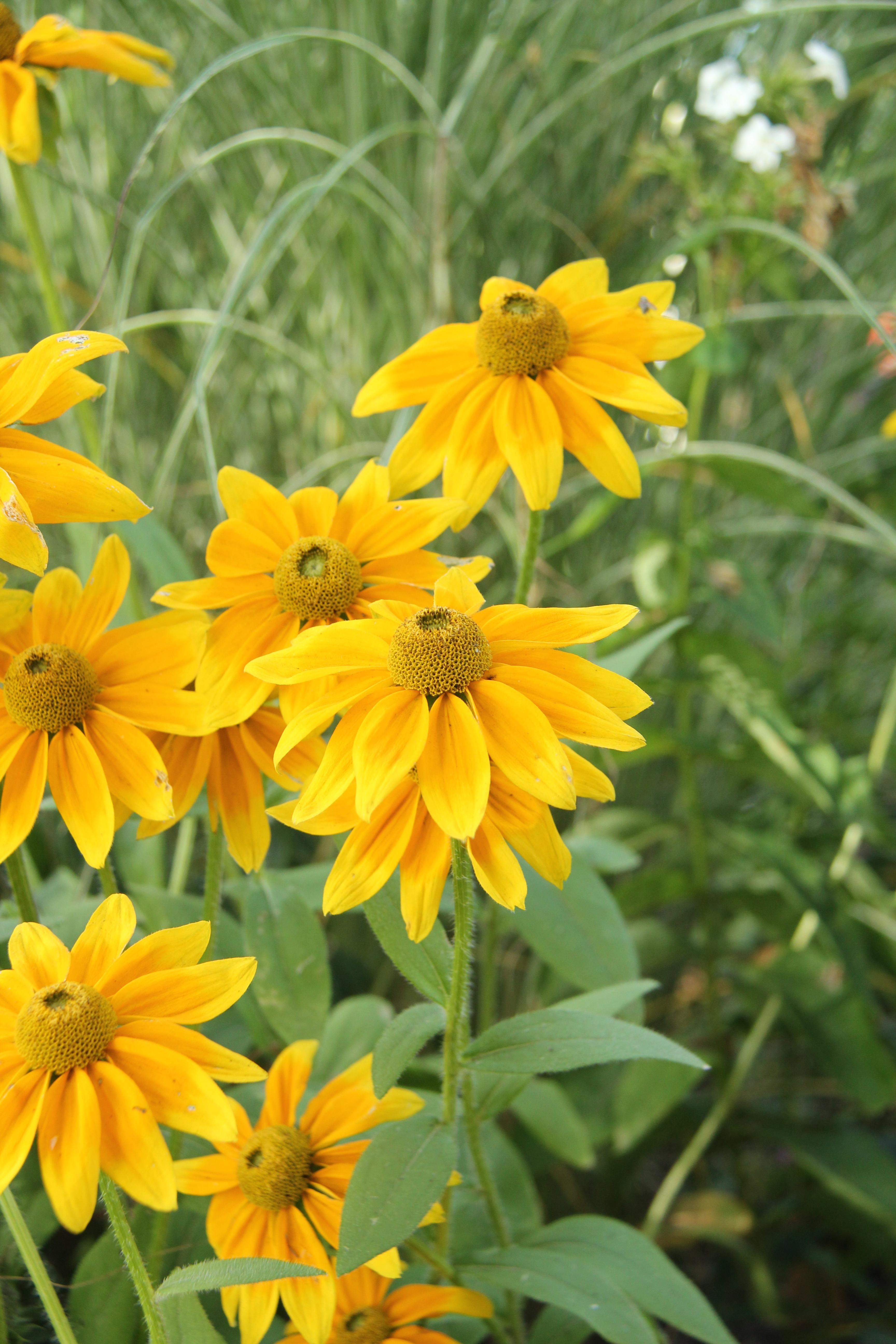 hög gul blomma