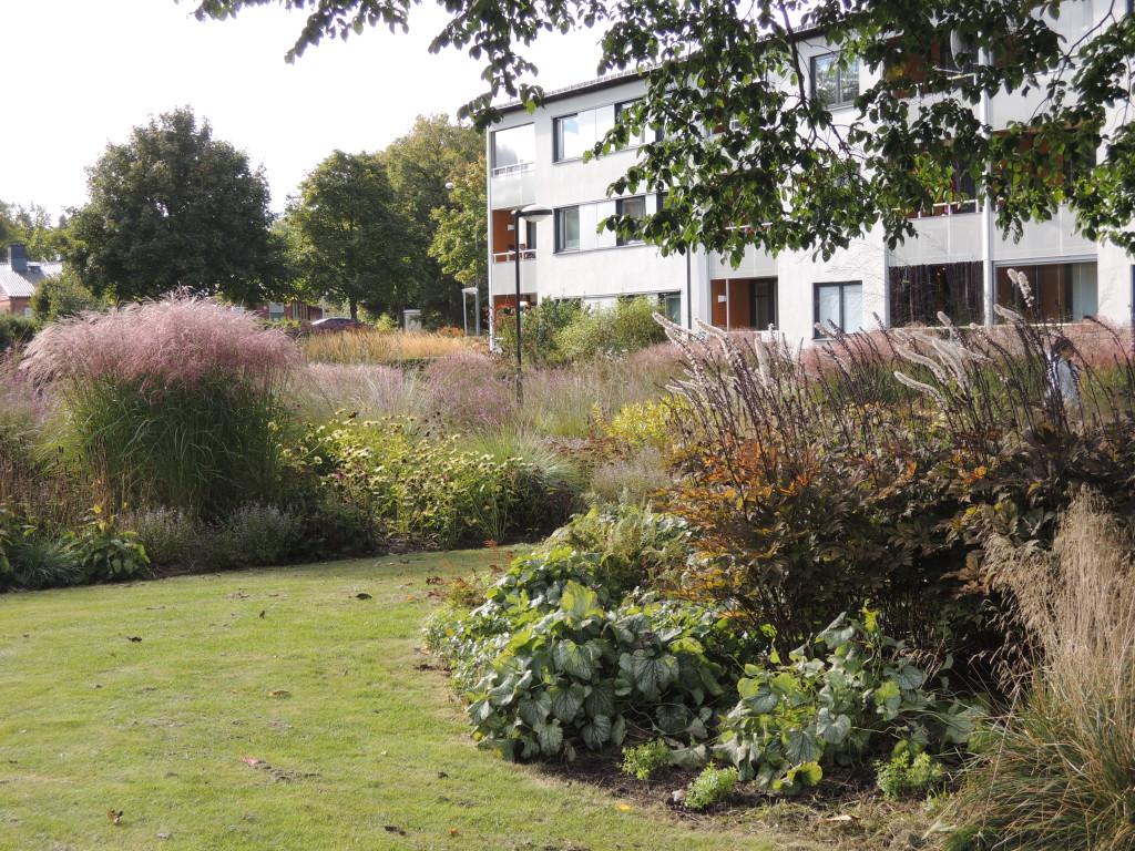 """Ett kännetecken för parken är alla de höga gräsen, som i kombination med andra perenner ger ett stort effektfullt och mer """"ängslikt"""" uttryck."""