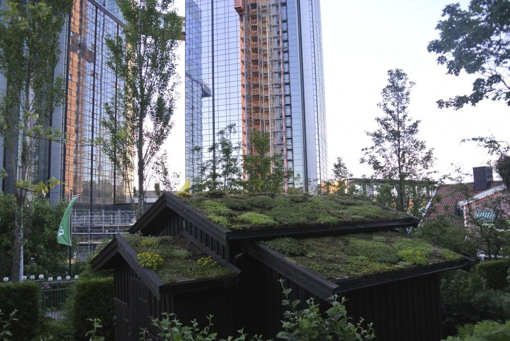 Takträdgårdar i staden! Både modernt, snyggt och miljövänligt.