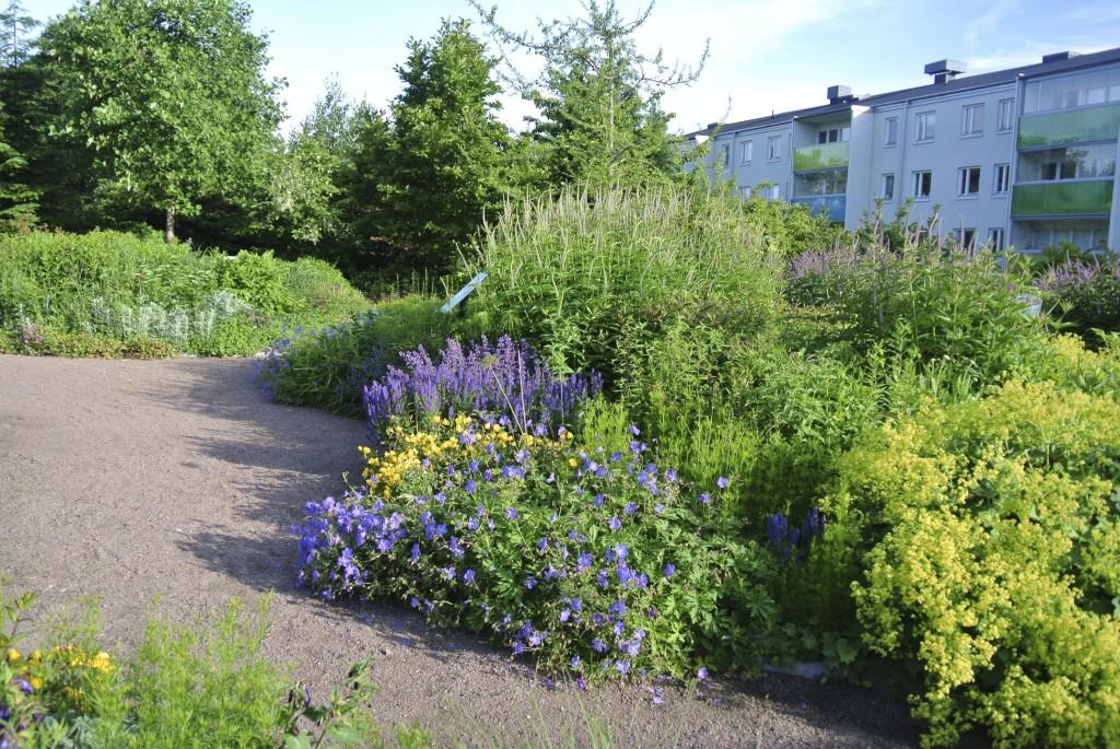 13 000 perenner samsas i parken! De valda växterna kräver nästa ingen skötsel och ogräs i rabatter och gångar rensas för hand. På våren slås perennerna ner och växtmaterialet får ligga kvar och förbättra jorden.