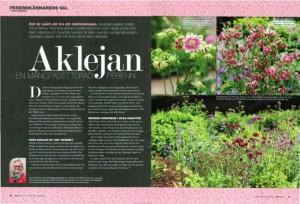 Växtporträtt om akleja, Aquilegia vulgaris, i tidningen landskap