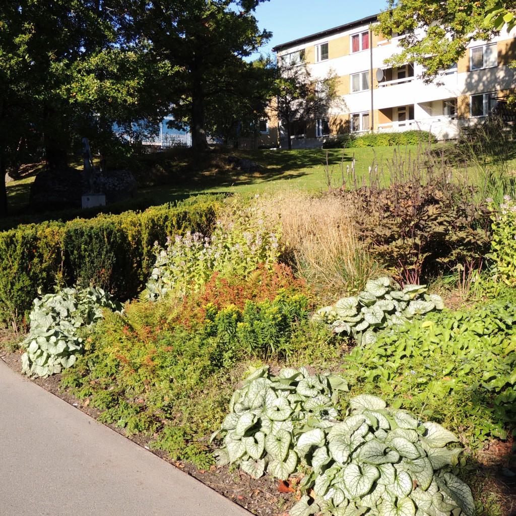 För att bibehålla sin silvriga färg är morgonsol och vandrade skugga bäst. Bilden är från Skärholmens Perennpark som är gestaltad av Piet Oudolf i samarbete med Stefan Mattson.
