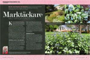 Artikel om kaukasisk förgätmigej, Brunnera macrophylla, i tidskriften Landskap