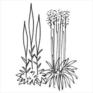 växtsätt - vertikala