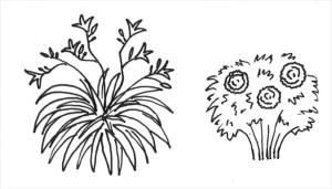 växtsätt - solitär